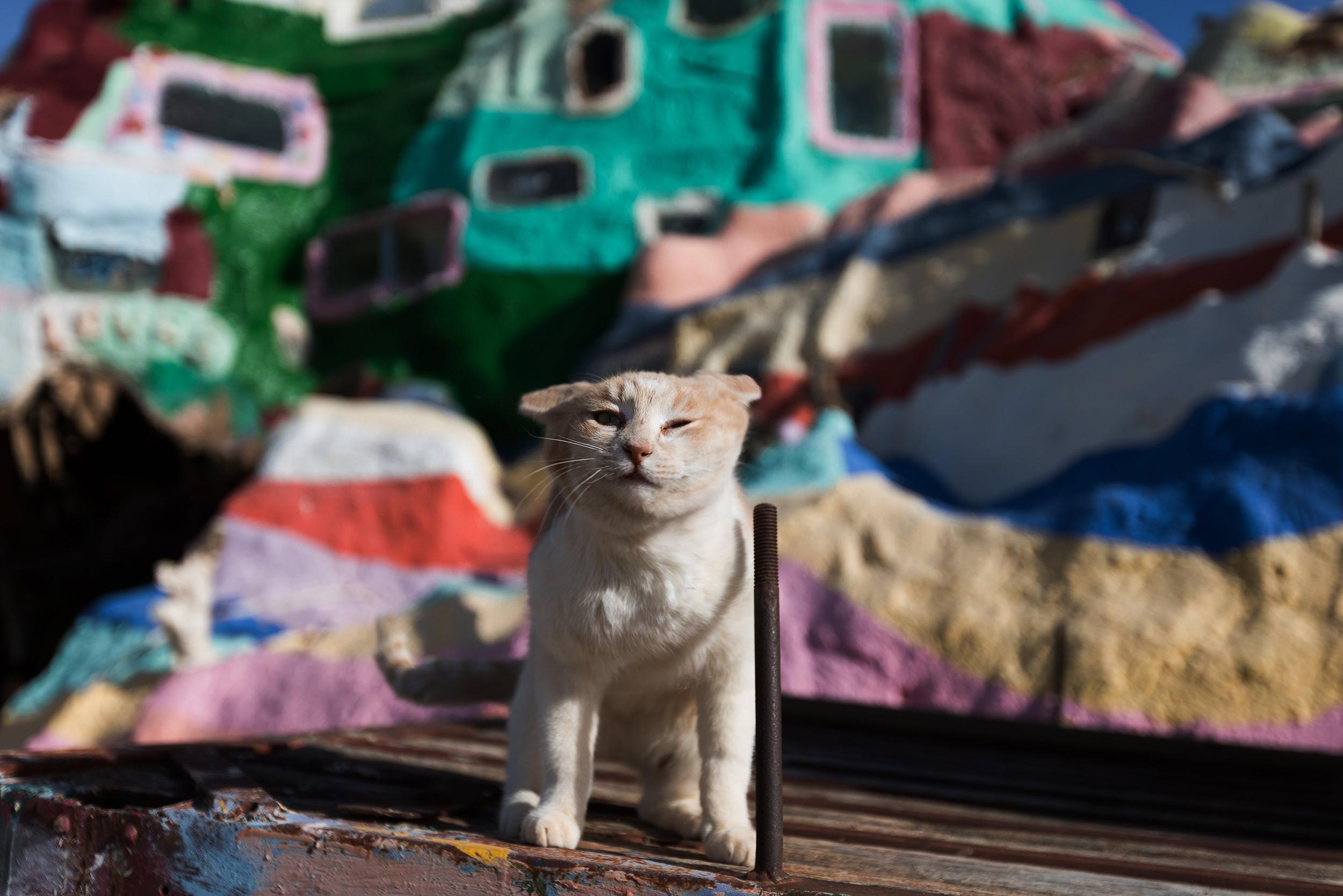 cat at Salvation Mountain
